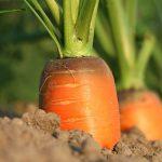 農業が抱える社会問題