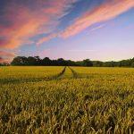 農業の未来について。農業革命時代が訪れる理由とは。